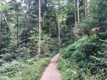 walk at Taubenberg mountain
