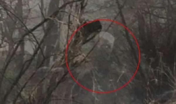 Видеозапис показва бродещия призрак на убит от влак мъж (видео)