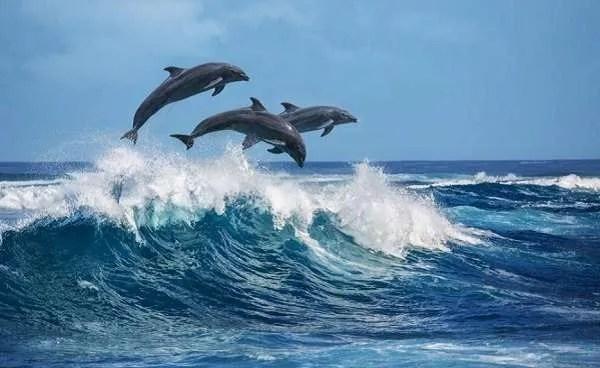 Невероятни случаи, в които делфините спасяват хора от акули (видео)