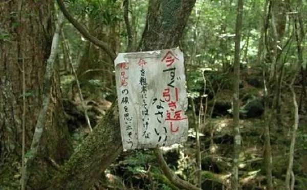 Гората Аокигахара в Япония, наречена Гората на самоубийците
