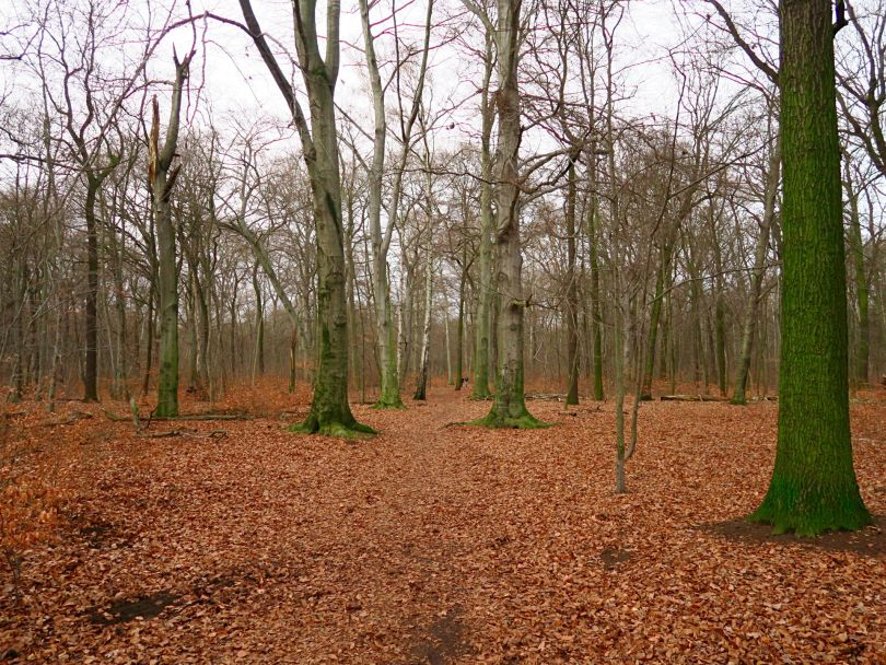 I mean what can you expect from a place that's been neglected for so many years and you have to walk through a forest that looks like this before you get in?