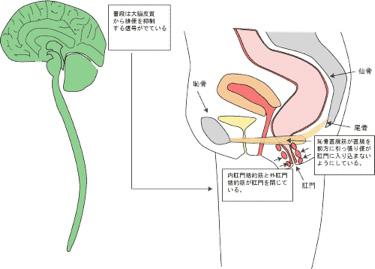 便失禁と便秘、原因と治療の最前線   hidejijiの生活と暮し