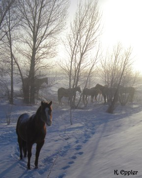 The horses, attending their morning business meeting.