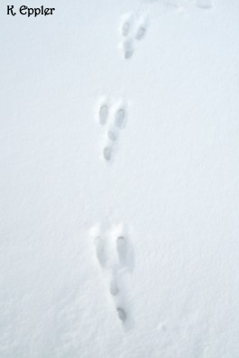 Hopping down the bunny trail...