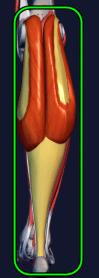 下腿三頭筋
