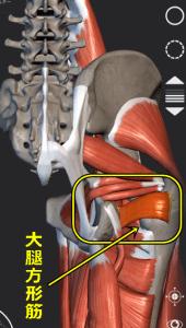 大腿方形筋