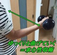 筋肉 収縮様式