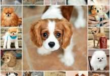 Какое имя выбрать собаке мальчику, клички для собак, как выбрать.