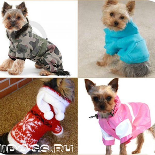 Одежда для йоркширского терьера, что нужно для содержания собаки, гардероб для йорка.