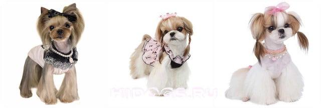 Собаки породы ши тцу, размеры собаки, особенности ухода, кормления, воспитнаие и содержания, стандарт.