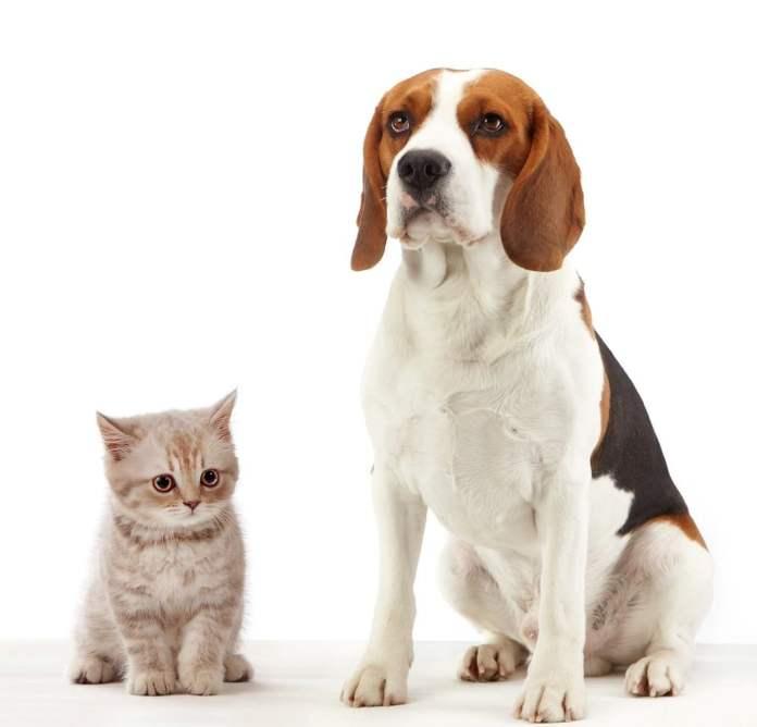 Пёсик и котик.