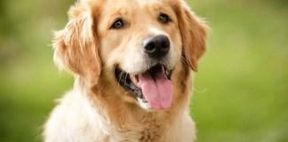 Самые дружелюбные породы собак, которые любят людей