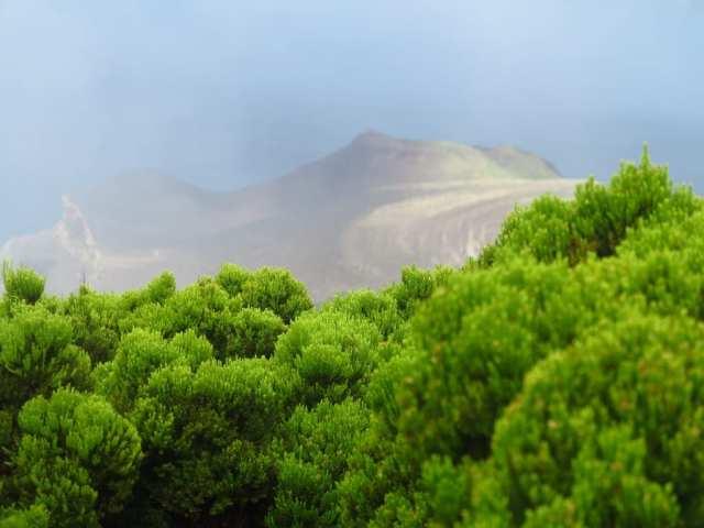 Blick über grünen Wald auf Vulkanlandschaft
