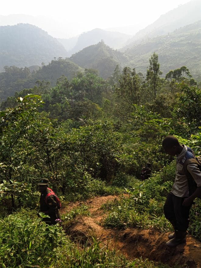 Gorillatracking Bwindi-Nationalpark Uganda