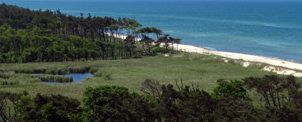 Weißer Strand mit Kiefern dahinter