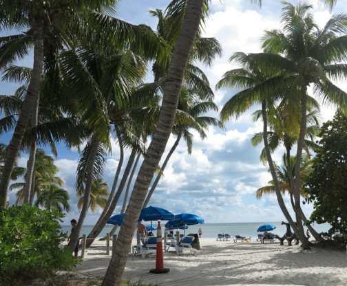 Strand mit Palmen und Sonnenschirmen