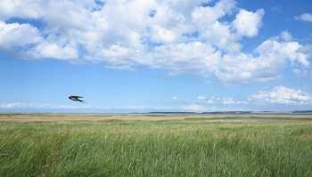 Flache Landschaft mit Meer und Vogel