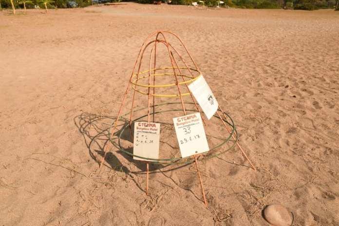 Caretta-caretta-Nest in Cirali an der Lykischen Küste