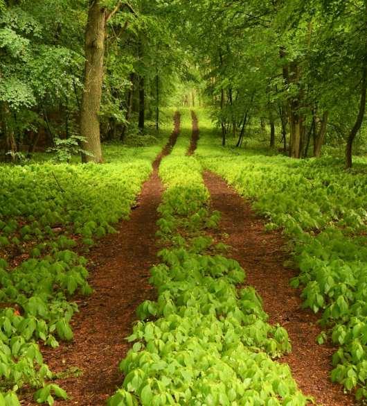 Wald in Mecklenburg