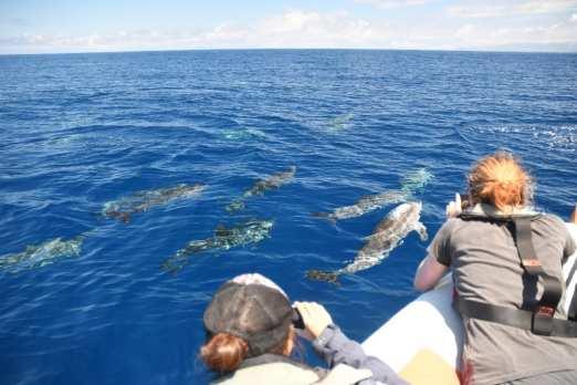 Whale Watching auf den Azoren