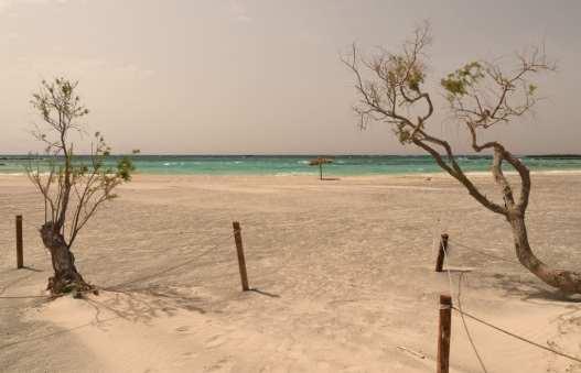 Strand mit weißem Sand, Baum und türkisfarbenem Wasser auf Kreta