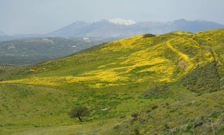 Schneebedeckte Berge und Blumewiesen auf Kreta