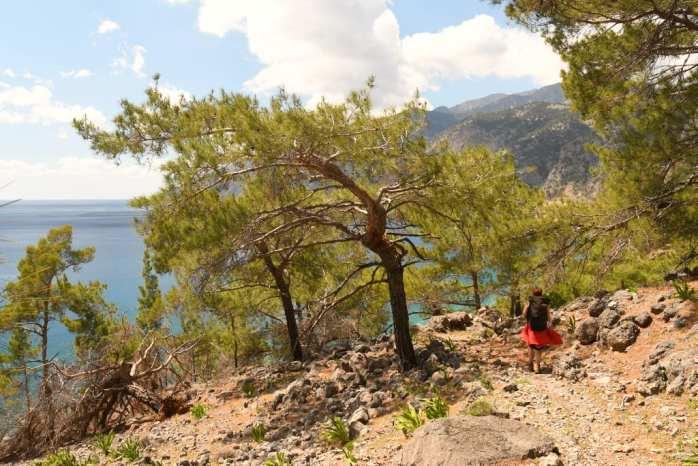 Pinien und Küste auf dem Wanderweg von Loutro nach Agía Roumeli auf Kreta