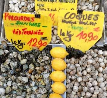 Zitronen und Muscheln