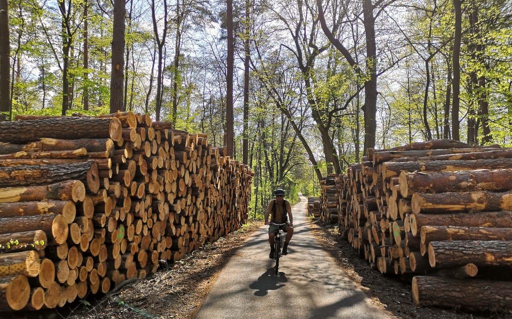 Man radelt vorbei an Holzscheiten durch den Wald