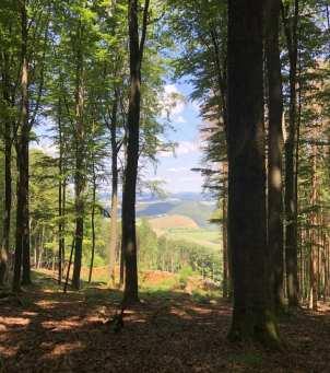 Bäume und schöne Landschaft