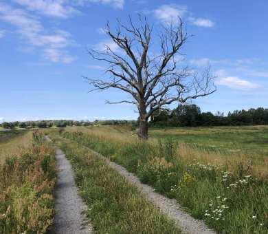 Wanderweg mit Baum