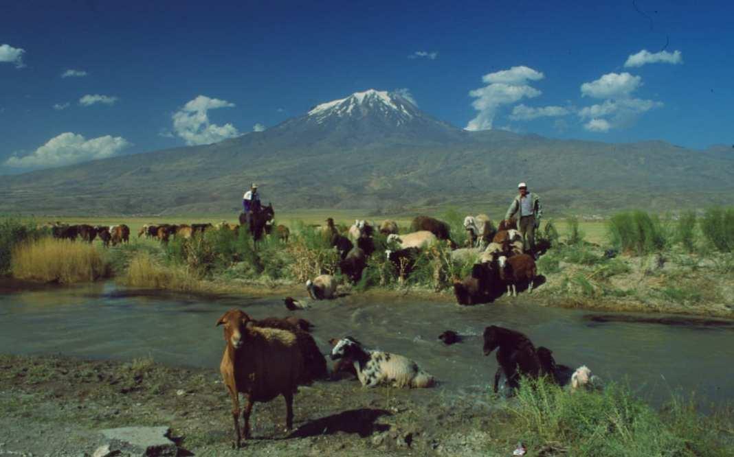 Schafsherde durchquert Fluss vor Vulkan mit Schneehaube