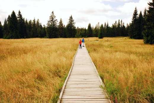 Wanderer laufen auf Steg über Hochmoor