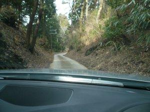 奥千本への林道の様子
