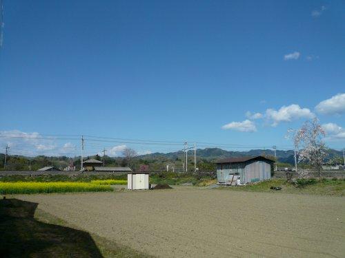 和銅農園周辺、菜の花と桜