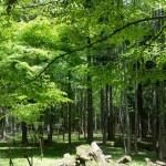 【高野山】森林セラピーで森呼吸~写経で精神統一の巻