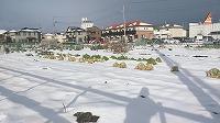 蔵敷雪景色201601