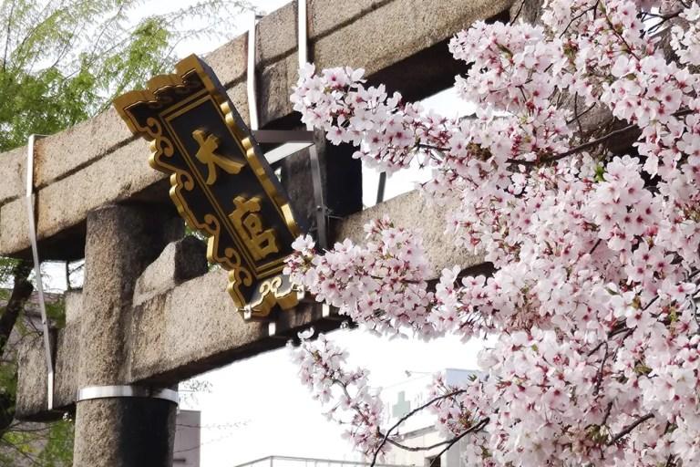 大宮神社春祭り2017