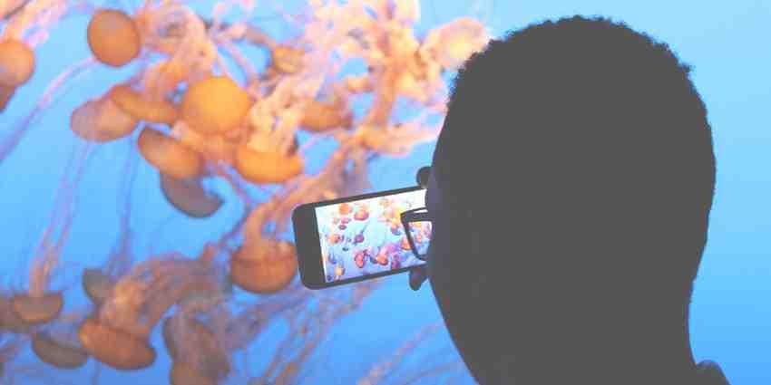 Comment prendre des photos sous l'eau avec un iPhone ?
