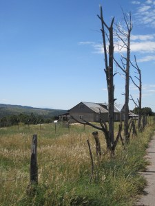 Llano fence using dead trees