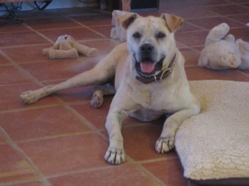 rescue dog finn