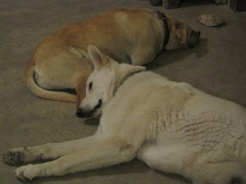 rescue dog finn & kelee