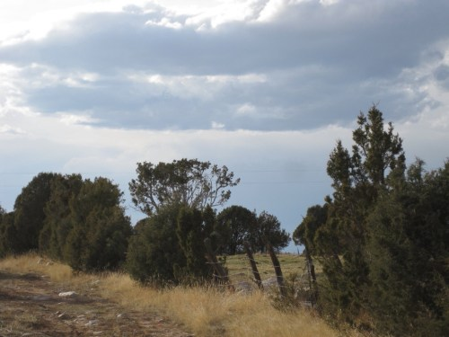 land grant trees