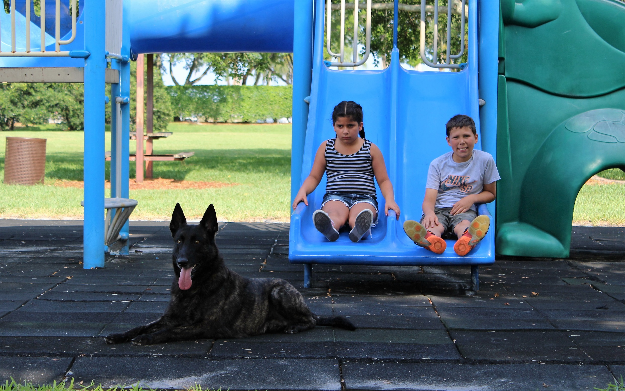 Children and Protection Dogs