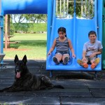 Children-Protection Dogs