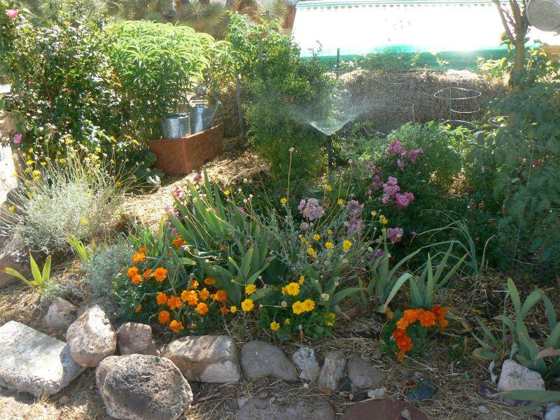 Jan\'s stunning permaculture garden in Meadview