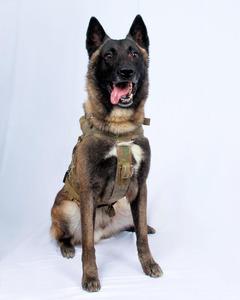 写真 バグダディ かわいい 軍用犬 トランプ大統領
