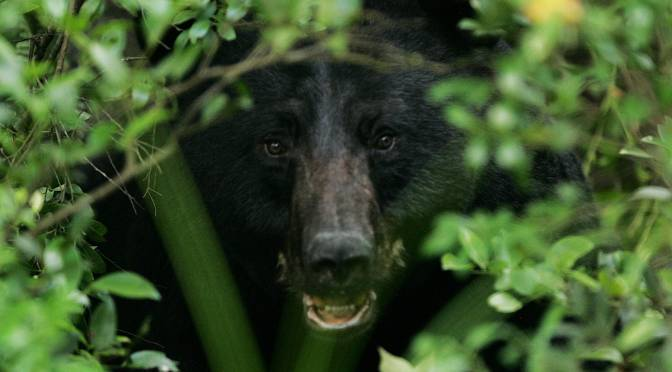 The Coming American Wildlife Conflict