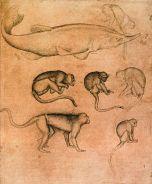 493px-Pisanello_-_Sturgeon_and_Six_Monkeys_-_WGA17879