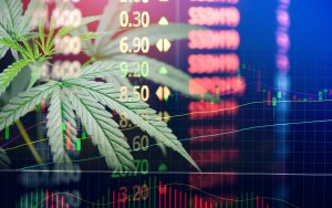 cannabis investment services